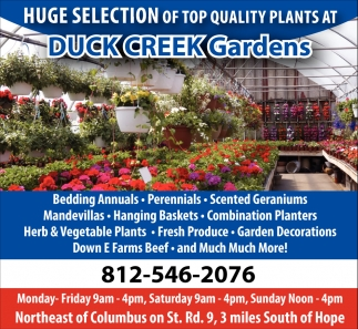 Huge Selection Of Top Quality Plants