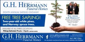 Free Tree Sapling!